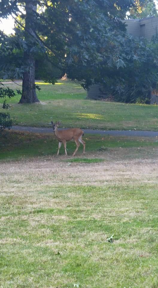 ▲緑豊かなキャンパスでは鹿を見ることも