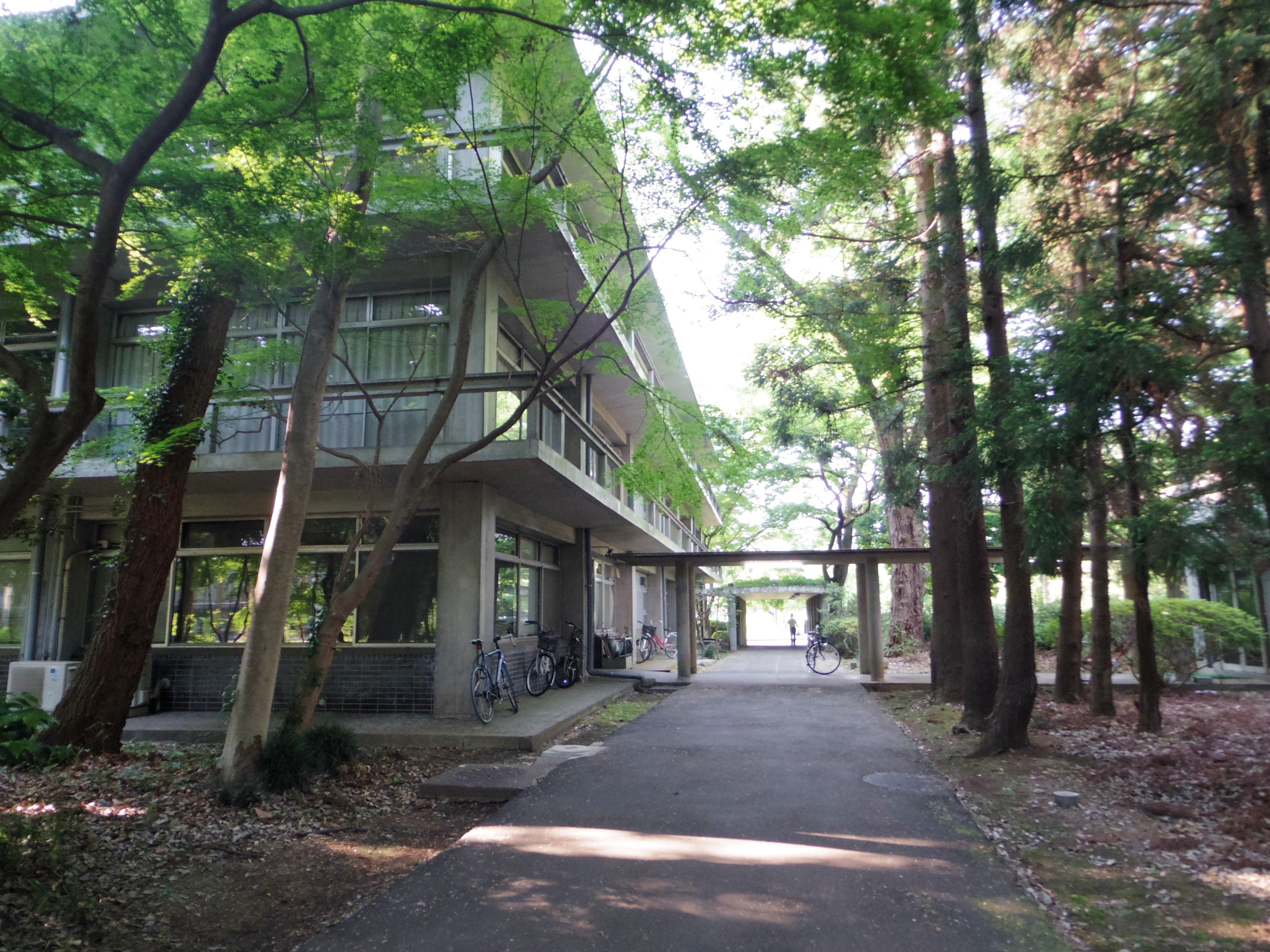 旧D館は1958年完成。写真は旧D館と大学礼拝堂の間の道。